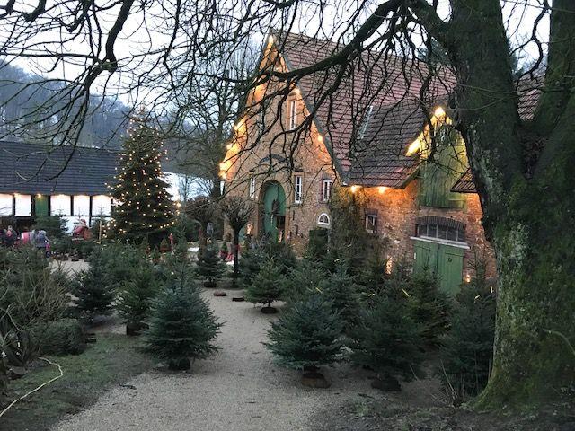 Weihnachtsbaum Kaufen Gütersloh.Weihnachtsbaumverkauf Torsten Lange In Bielefeld