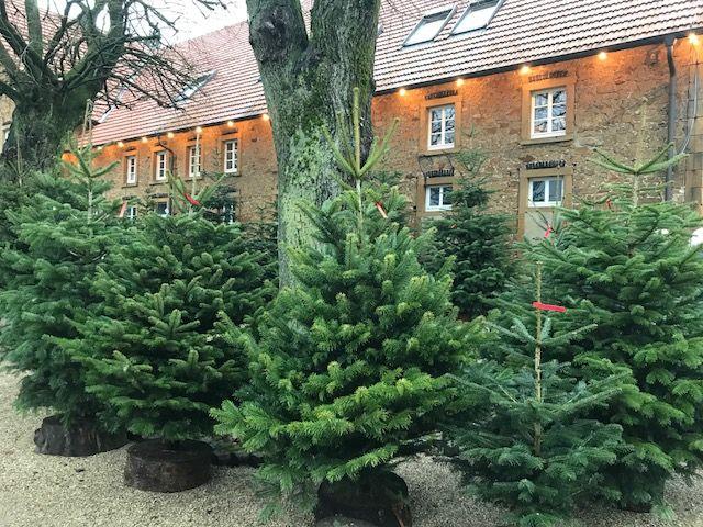 Weihnachtsbaumverkauf Torsten Lange In Bielefeld